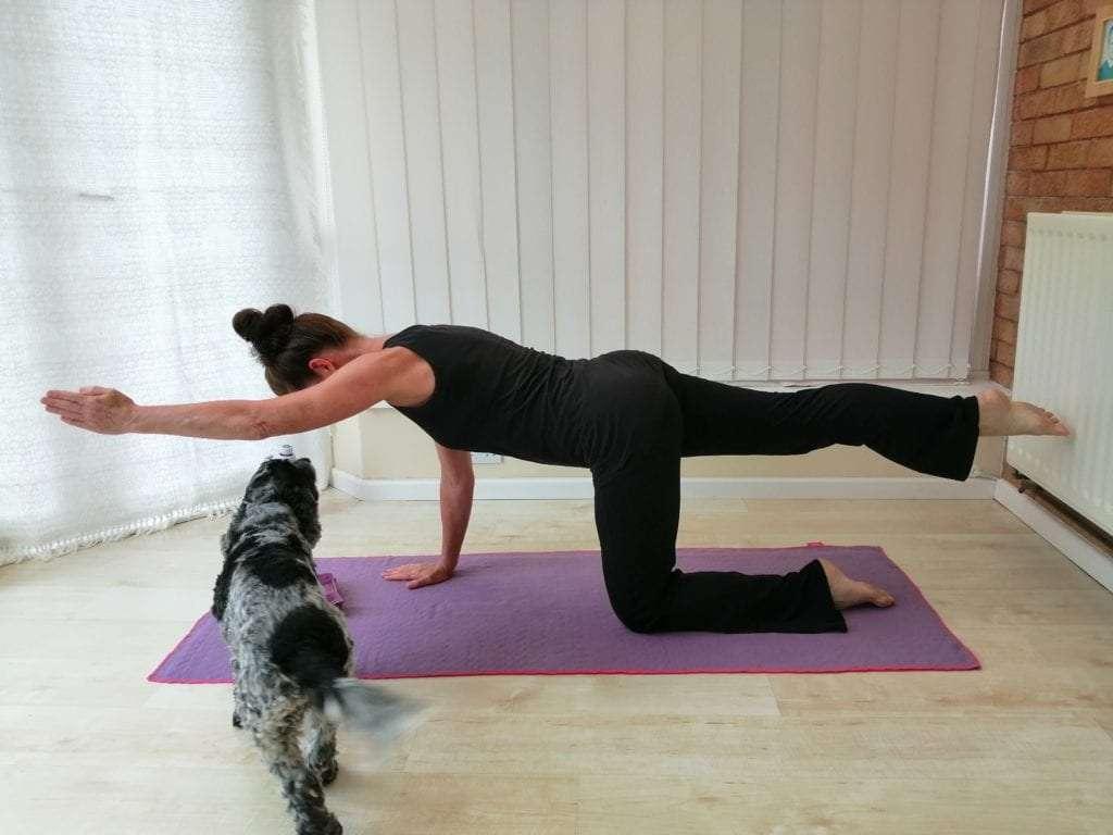 woman yoga pilates dog